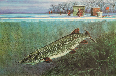 Scott zoellick tip up s n ice fishing northern pike ebay for Tip up fishing