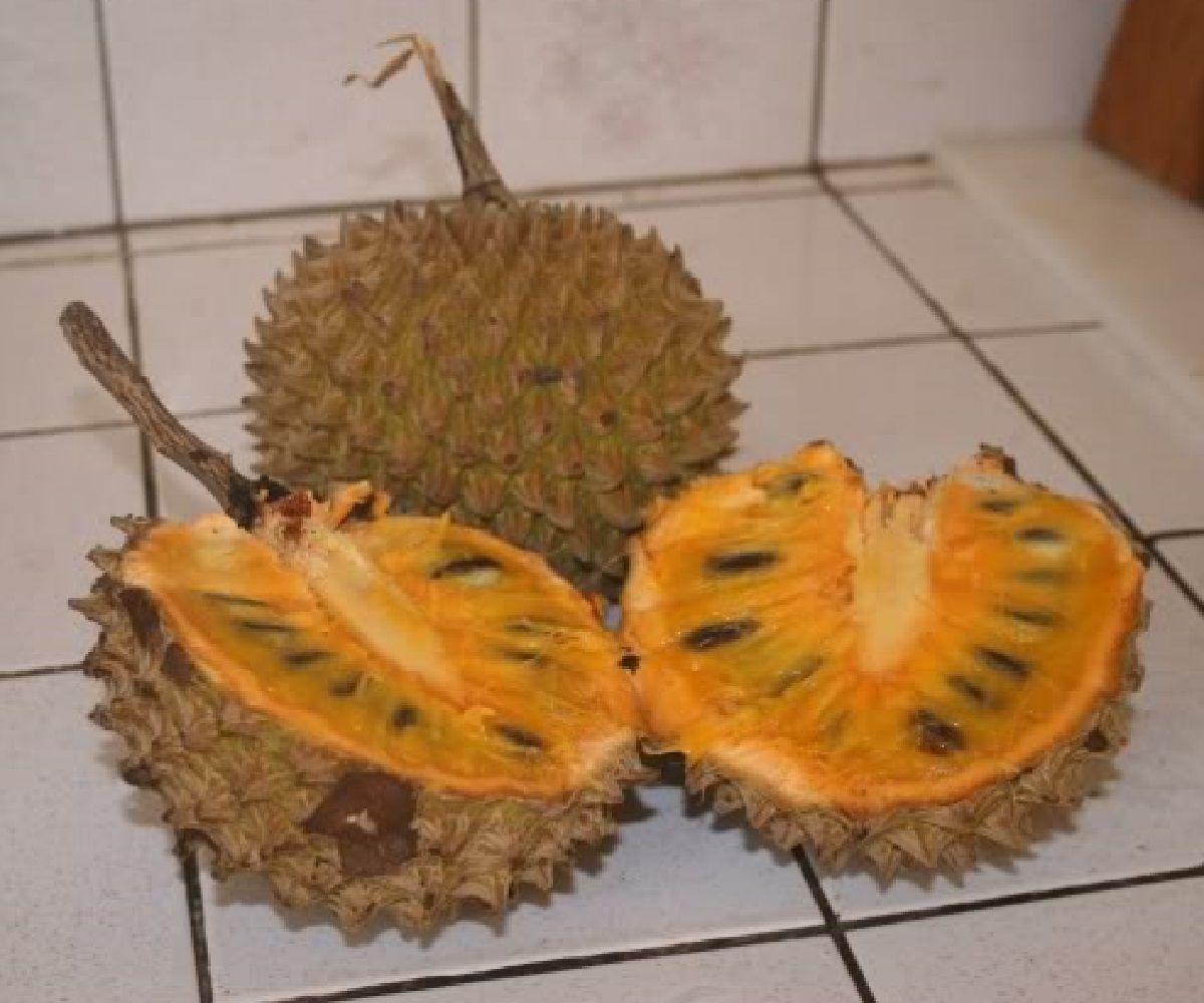Polynesian Produce Stand Soncoya Ilama Annona Purpurea