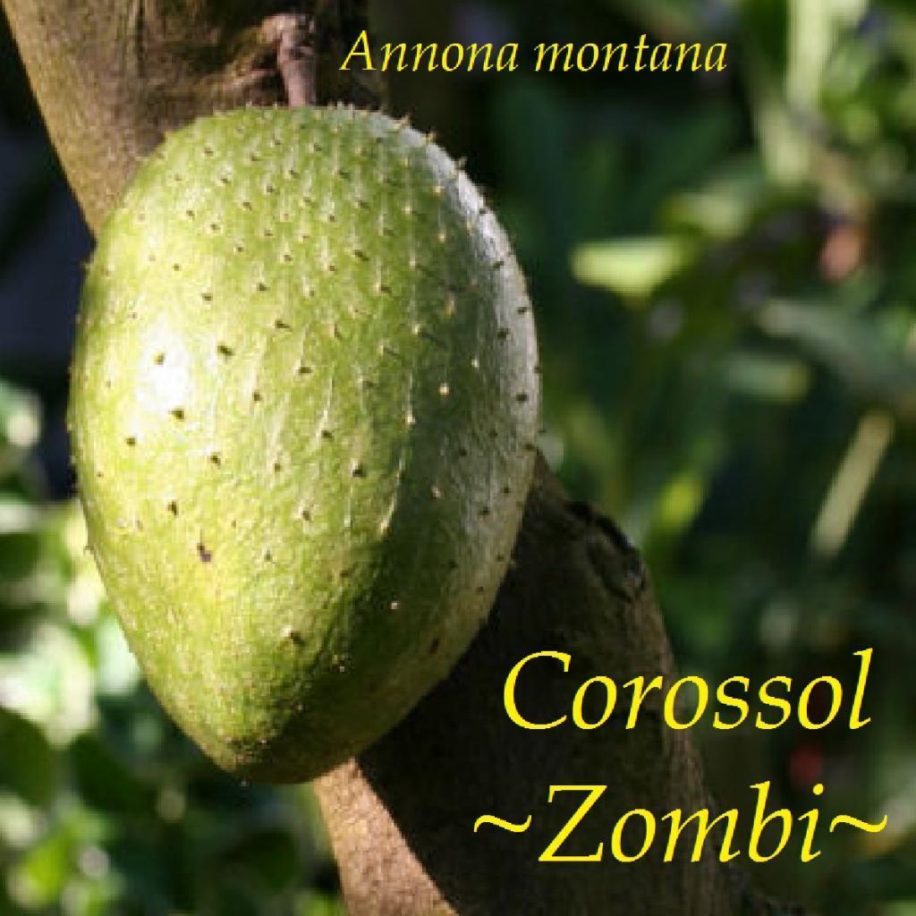 Polynesian Produce Stand Corossol Zombie Fruit Tree