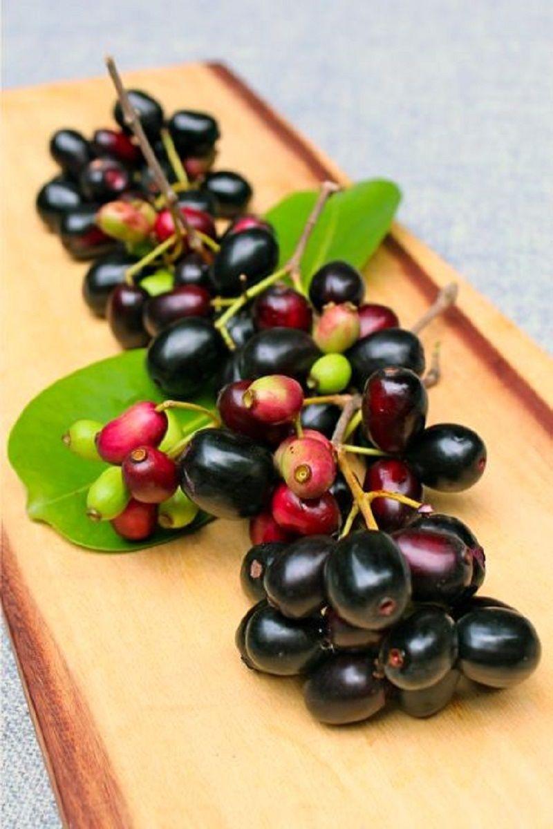 Polynesian Produce Stand Jamun Fruit Tree Syzygium