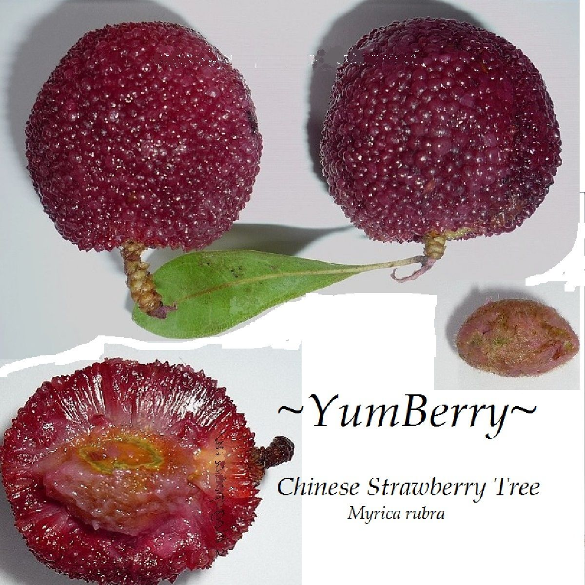 Polynesian Produce Stand Yumberry Myrica Rubra Red