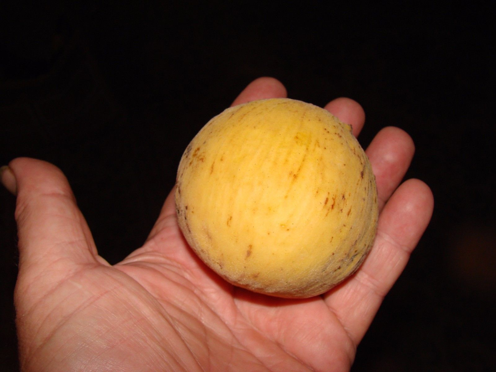 Polynesian Produce Stand Santol Yellow Mangosteen