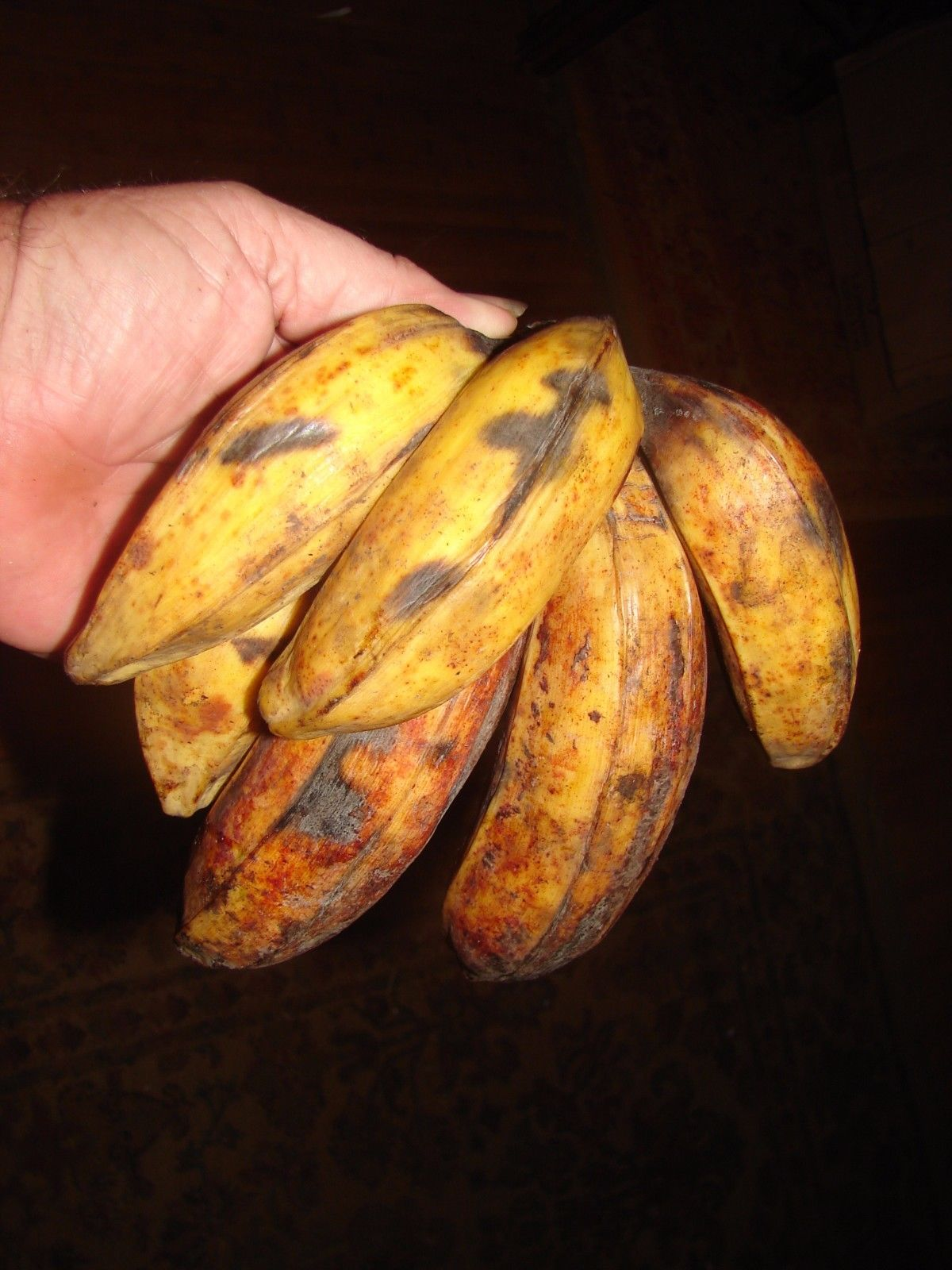 Polynesian Produce Stand : ~DWARF NAM WAH~ Musa Pisang Awak Banana Fruit Tree Live Small Potted Plant1200 x 1600 jpeg 194kB