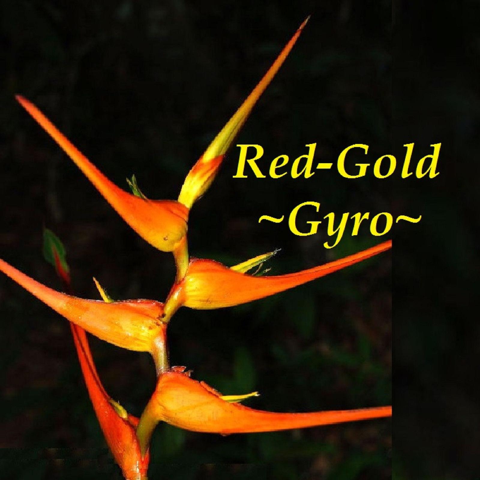 Special Buy 2 Get 2 Free Heliconia latispatha Orange Gyro live rhizome plant