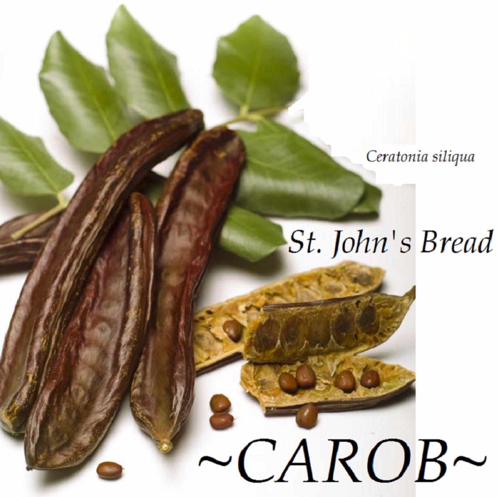 Polynesian Produce Stand Carob Ceratonia Siliqua Rare