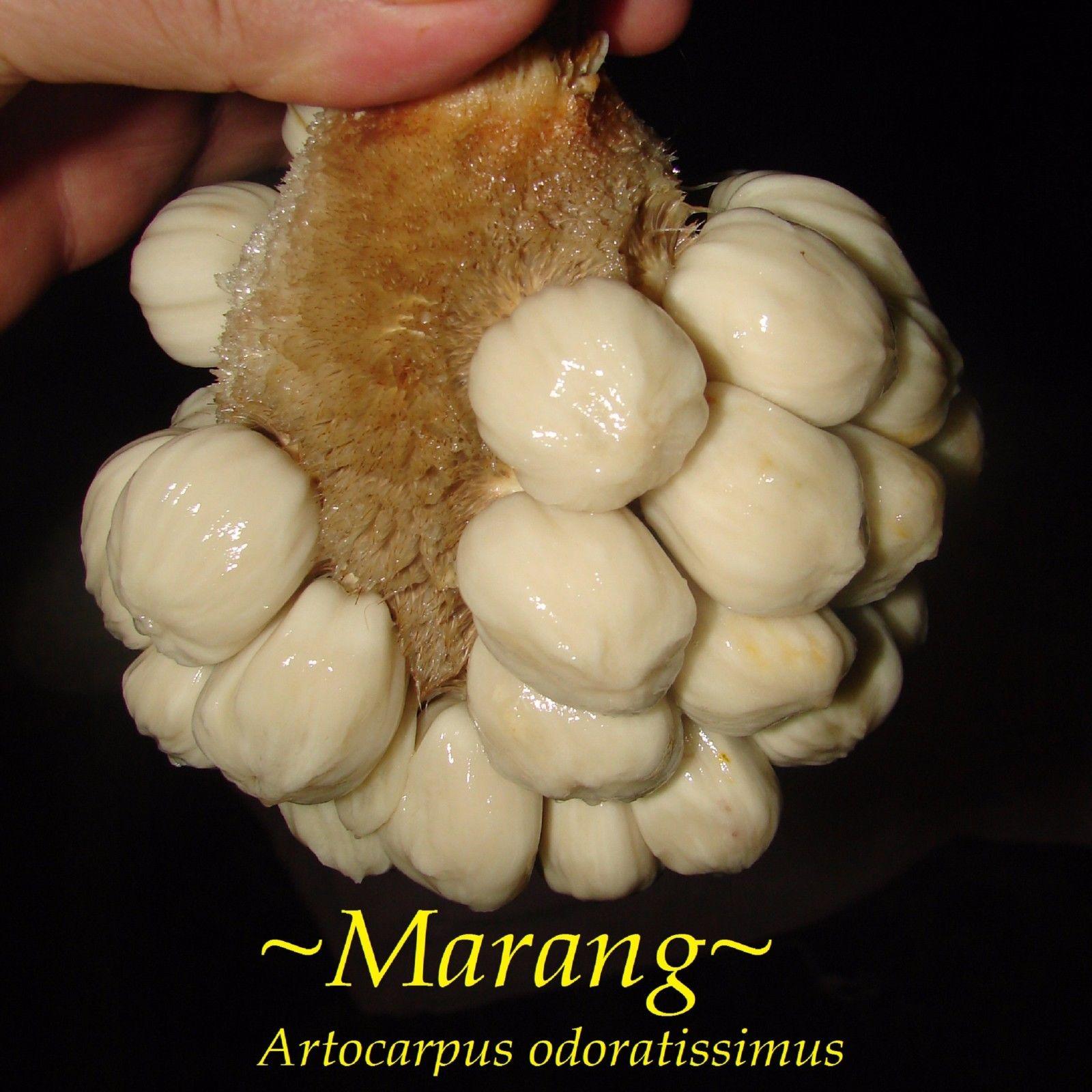 Polynesian Produce Stand Marang Artocarpus Odoratissimus