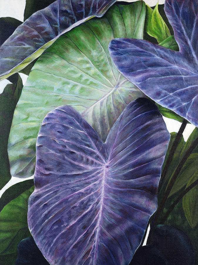 Polynesian Produce Stand : ~PURPLE GUPPY~ TARO Colocasia esculenta