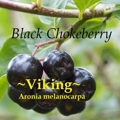 polynesian produce stand viking cv black chokeberry. Black Bedroom Furniture Sets. Home Design Ideas