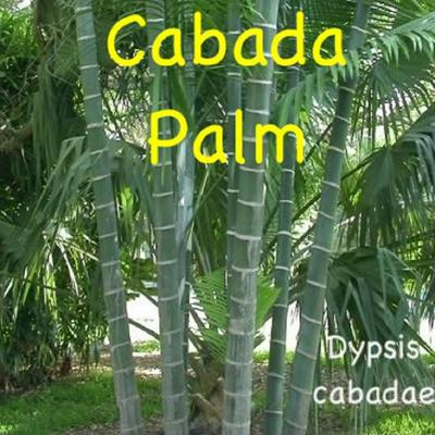 how to grow a palm tree seedling