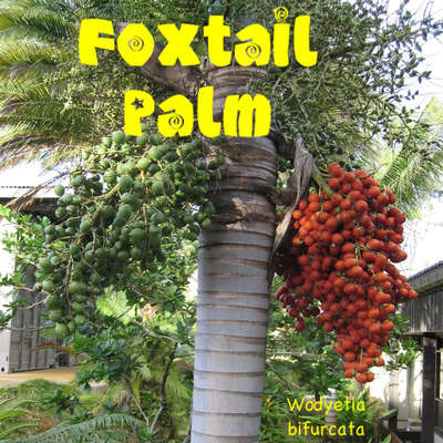 how to stop palm tree roots in my garden
