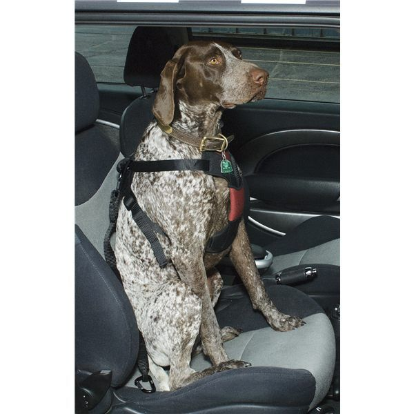 ASPCA Safety Travel Dog Harness - Medium