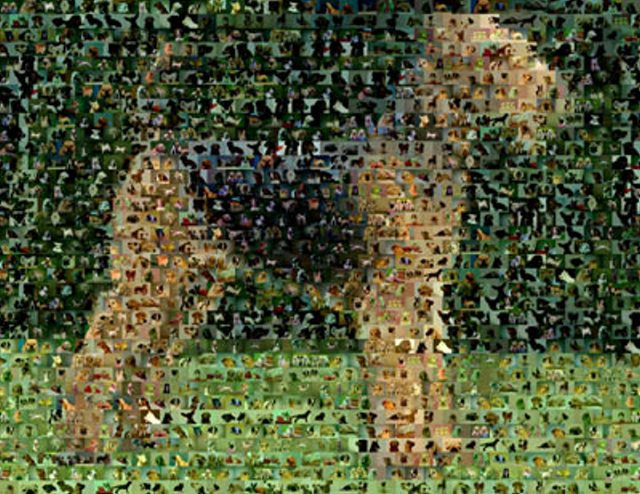 Amazing Airedale Terrier Dog Montage 1 of only 25 w COA
