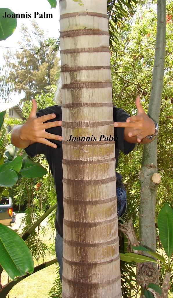 Joannis Palm Trunk Detail  picture by 7_Heads