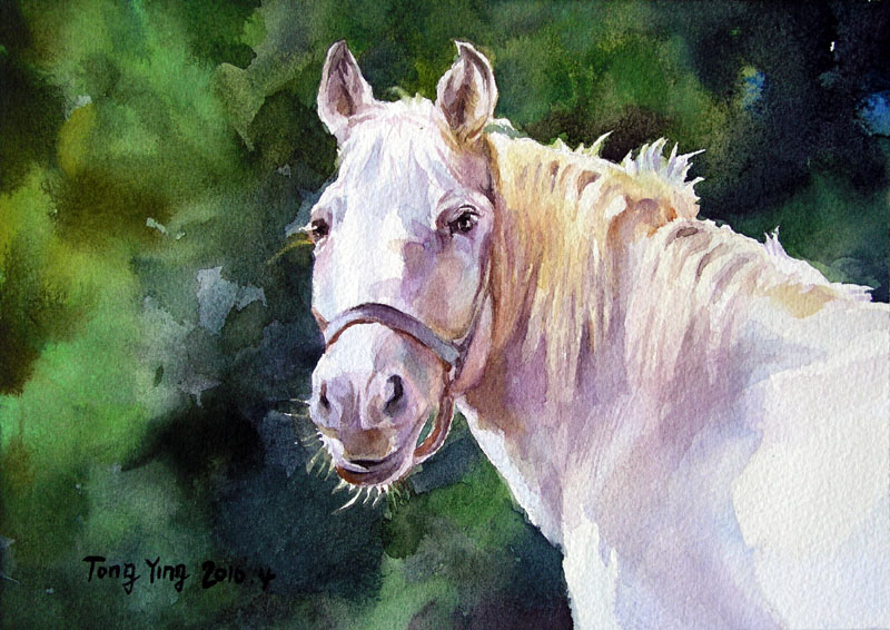 zyq505051830 : NEW!! Original watercolor painting, White horse