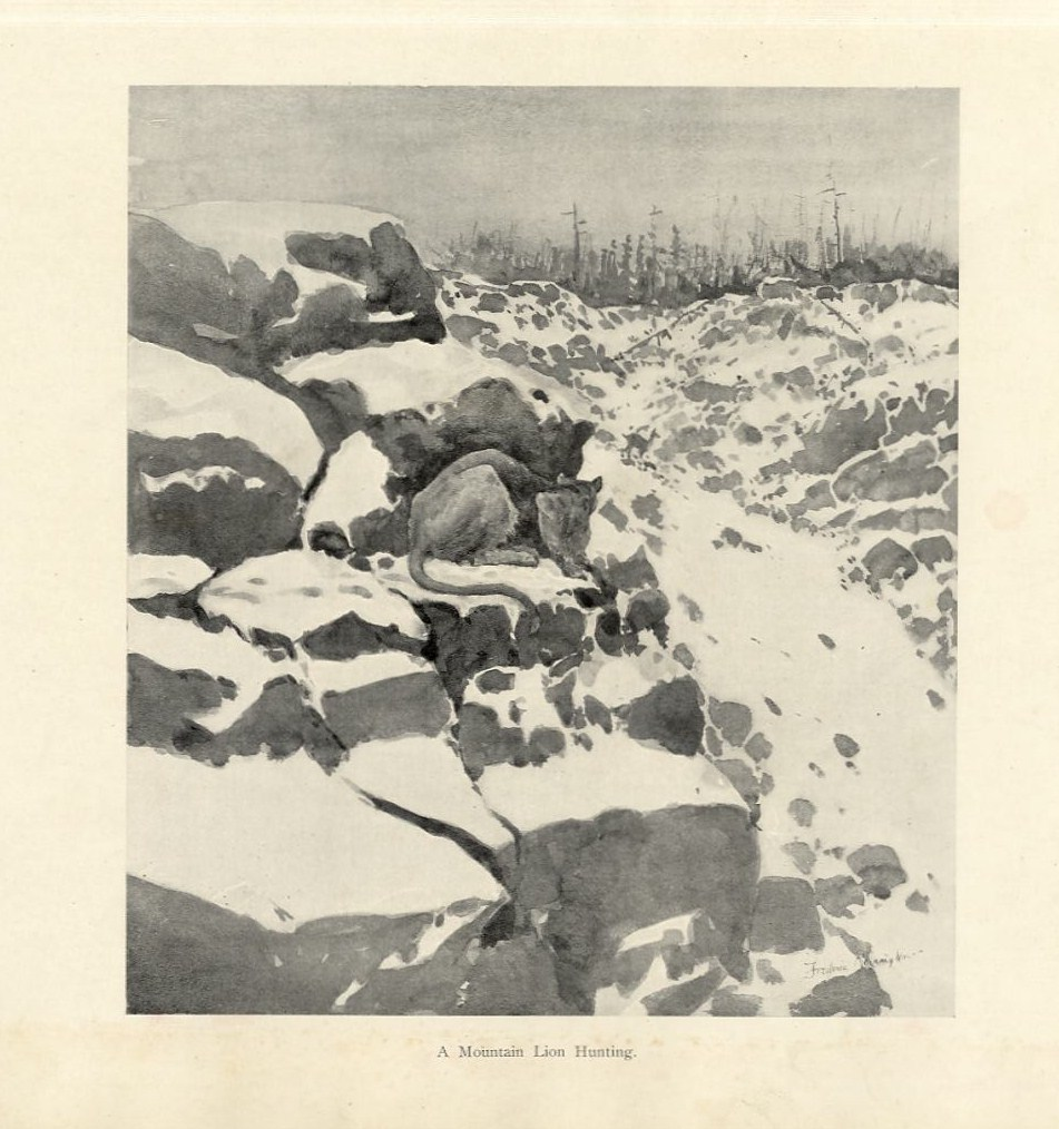 Details about FREDERIC REMINGTON A MOUNTAIN LION HUNTING SPOTS A DEER IN  THE SNOWY MOUNTAINS