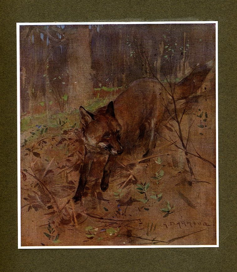 VINTAGE FOX THIEF FOX ANTIQUE FOX IN THE WOODS COLOR PRINT THE OLD CUSTOMER