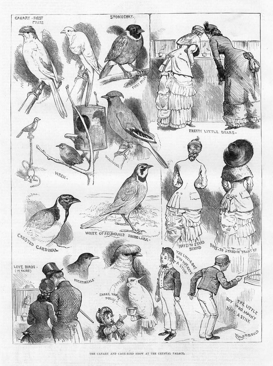 BIRDS, CANARY AND CAGE-BIRD SHOW, CRYSTAL PALACE, WREN, CARDINAL ...