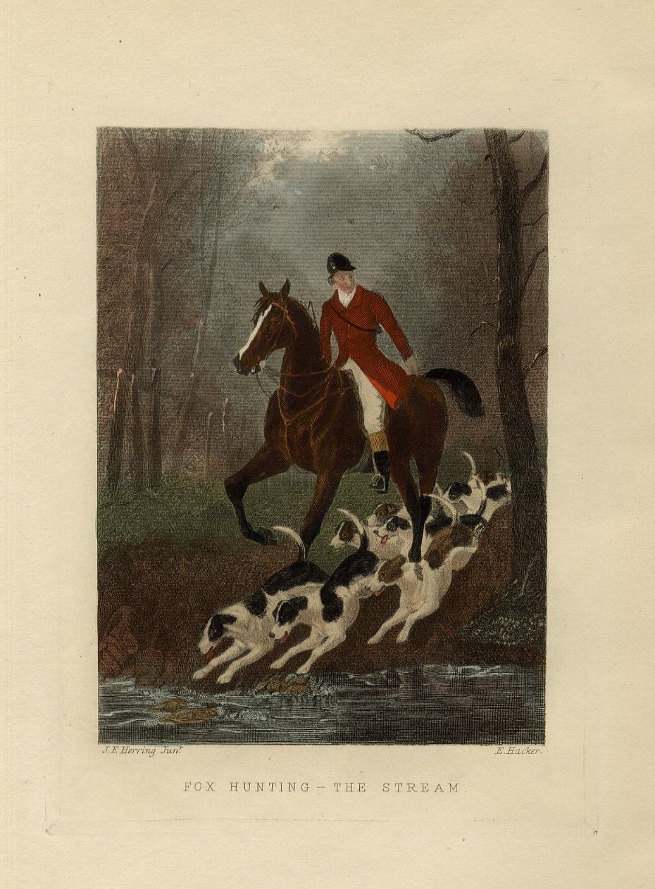 FOXHOUNDS HORSE AND RED COAT RIDER CROSSING THE STREAM FOX HUNTING ...